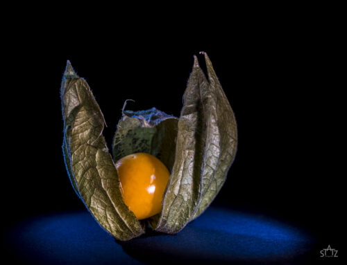 Makrofotografie – Beleuchtung mit Lume Cubes
