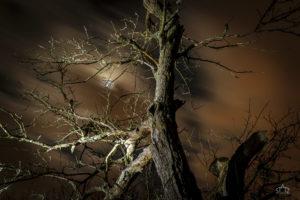 Uwe Statz - Fotografie - Magisches Licht